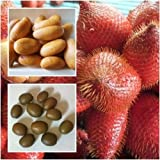Salak 10 Fresh Seeds, Salacca Zalacca, Zalacca Fruit Delicious Juicy Thailand