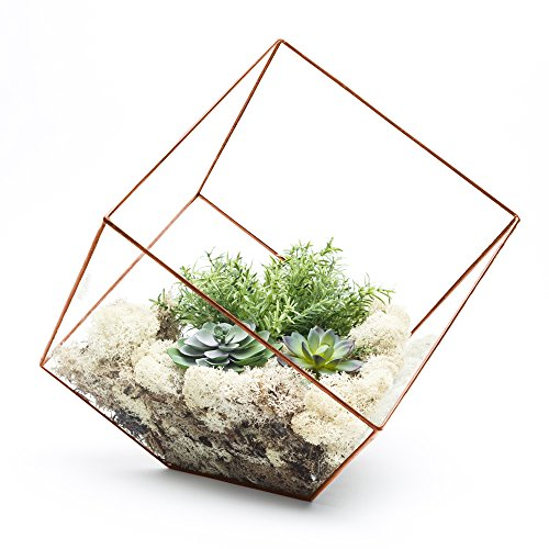 SUPERSIZE EXTRA LARGE TERRARIUM - AZTEC COPPER CUBE - FRAME ONLY. Also available fully assembled with faux succulent plants and LED lights 10'' x 10'' x 10'' (Empty - Frame only) by The Urban Botanist (Image #2)