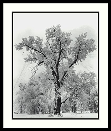 Framed Art Print, 'Oak Tree, Snowstorm, Yosemite National Park-1948' by Ansel Adams: Outer Size 27 x 32