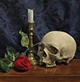 The Art of Still Life: A Contemporary Guide to