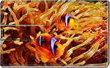 Luxlady 32GB USB Flash Drive 2.0 Memory Stick Credit Card Size Two clowfish together its anemone IMAGE 39758582