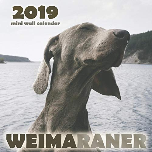 Wall Calendar ()