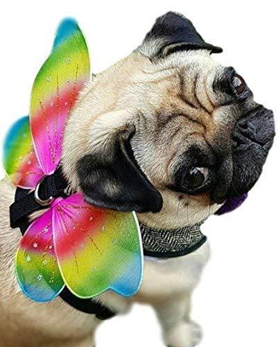 Alas Disfraz para Perro Mascota Gato Animal Arcoiris Hada Hada Mariposa: Amazon.es: Productos para mascotas