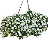 Calibrachoa - Kabloom! White F1 - White Flowers - Flower Seeds - 100 Seeds