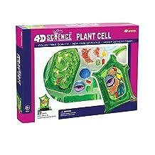 John N. Hansen Famemaster 4D-Science Plant Cell Anatomy Model
