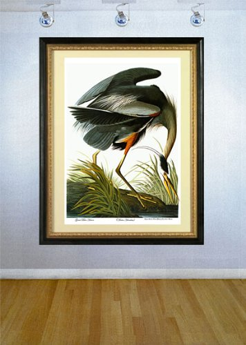 Audubon ''Great Blue Heron'' HUGE Audubon Birds of North America Art Edition Print