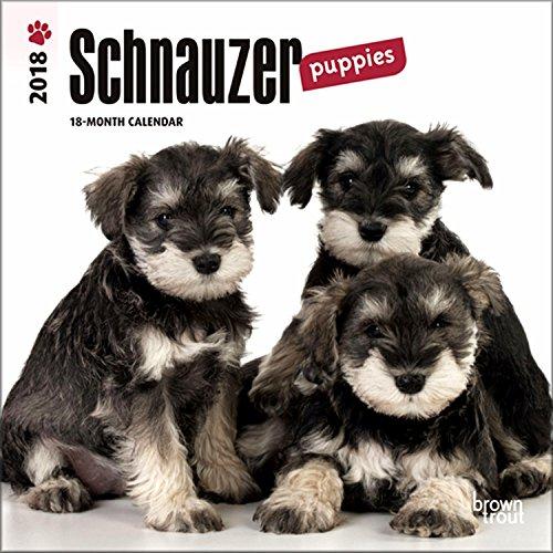 Schnauzer Puppies (Schnauzer Puppies Mini Calendar 2018 - Deluxe Small Wall Calendar (7x7))