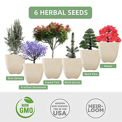 Smalltongue Indoor Bonsai Tree Garden Kit 6 Types Of Seeds With 6 Biodegradable Planting Cups Indoor Bonsai Tree Growing Starter Kit For Beginner Adult Kitchen Balcony Window Sill Pricepulse