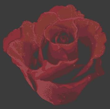 Rose Baccara 2770 Papier Peint Non Tisse Motif Roses De Fleurs Rouge