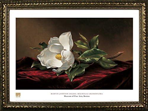 Framed Magnolia Grandiflora by Martin 2021 model Pr Heade 20x28 Johnson 2021 Art