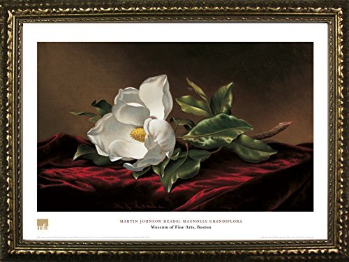 Martin Johnson Heade Magnolia (FRAMED Magnolia Grandiflora by Martin Johnson Heade 20x28 Art Print Poster Floral Painting White Flower From Museum of Fine Arts Boston Collection)