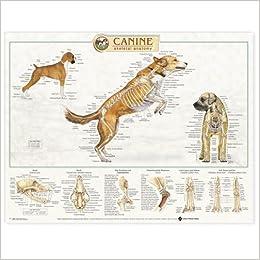 Elite Torrent Descargar Canine Skeletal System Anatomical Chart Kindle Paperwhite Lee Epub