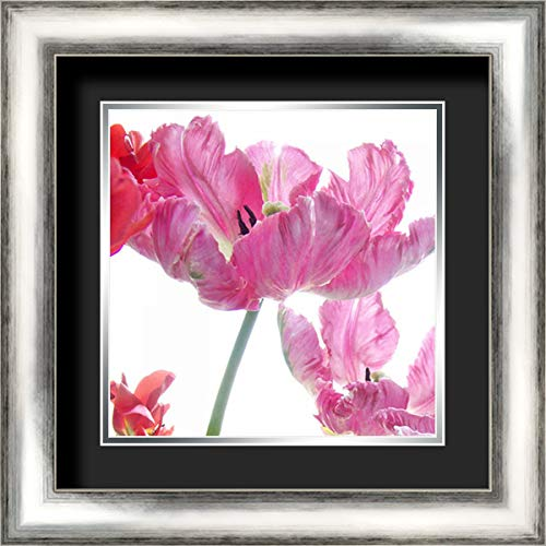 Parrot Tulips 20x20 Silver Contemporary Wood Framed and Double Matted (Black Over Silver) Art Print by Stalus, Judy