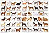 123Posters Dogs of The World Popular Breeds Chart Poster 36 x 24