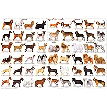 MY DOG BREEDS POSTER MORE THAN 100 WORLD DOGS SPECIE FOR EDUCATION DEMONSTRATION