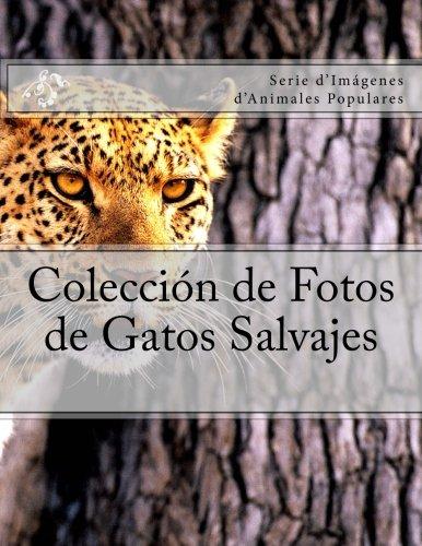 Coleccion de Fotos de Gatos Salvajes: Serie dImagenes dAnimales Populares (Spanish Edition) (Spanish) Paperback – March 24, 2018