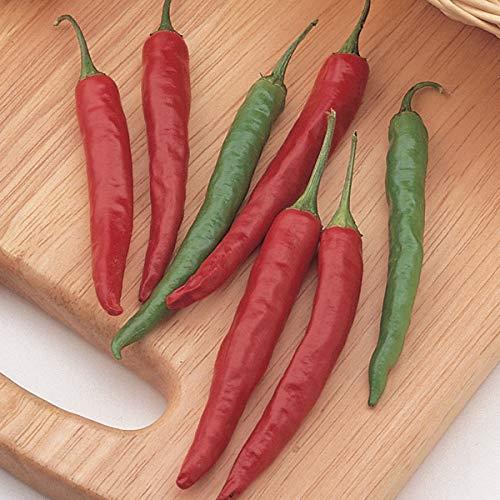 Pepper Hot Hybrid (Burpee Big Thai Hybrid Hot Pepper Seeds 75 seeds)