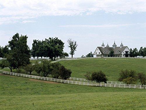 Lexington, KY Photo - Horses graze on a farm in bluegrass