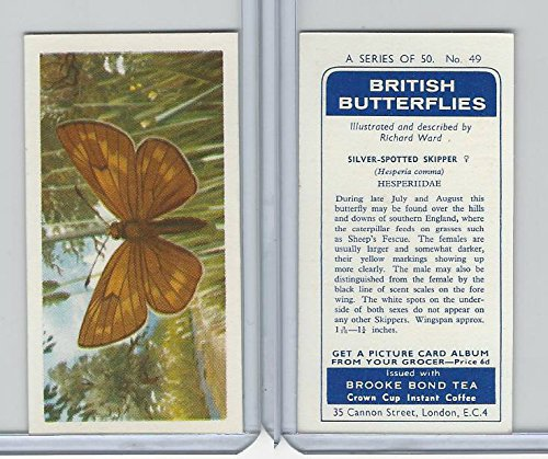 B0-0 Brooke Bond, British Butterflies, 1963, 49 Silver-Spotted Skipper ()