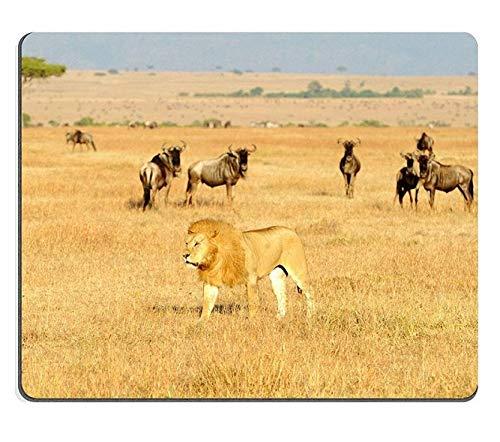 17P01080 Mousepads an African Lion Panthera Leo on The Masai Mara National Reserve Safari in Southwestern Kenya Mat Customized Desktop Laptop Gaming Mouse - Panthera Lion Leo African