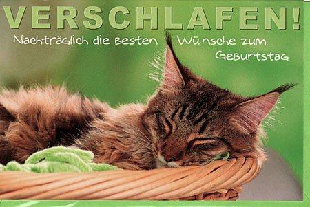 Geburtstagskarte Nachträglich Schlafende Katze Amazon De