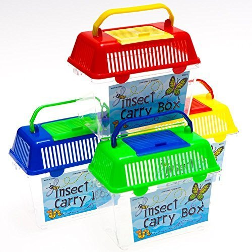 Rhode Island Novelty Insect Carry - Box Insect