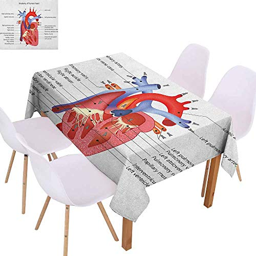 Easy Care Tablecloth Educational Medical Structure of The Hearts Human Body Anatomy Organ Veins Cardiology Picnic W50 xL80 Coral Red Blue