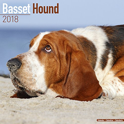 Basset Hound Calendar - Dog Breed Calendars - 2017 - 2018 wall Calendars - 16 Month by Avonside