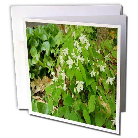 Green Square Photo Card - 3dRose TDSwhite – Spring Seasonal Nature Photos - Springtime Greens - 6 Greeting Cards with Envelopes (gc_284359_1)