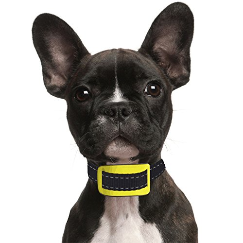 Our K9 Yellow Bark Collar Uses Sound And Effective