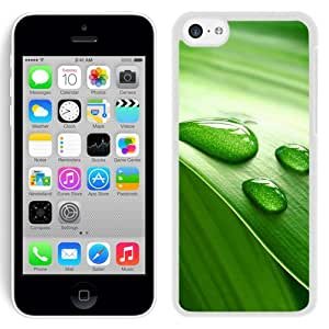 New Beautiful Custom Designed Cover Case For iPhone 5C With Leaves And Dew(2) Phone Case