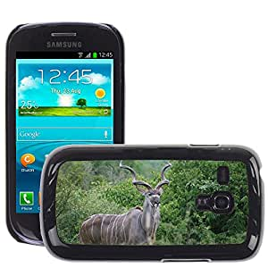 Hot Style Cell Phone PC Hard Case Cover // M00110842 Kudu South Africa Animal Kruger Park // Samsung Galaxy S3 MINI i8190