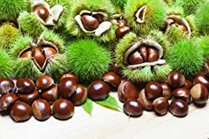 2 pcs Chestnut GRAFTED plant, kemer and isiklar rooted