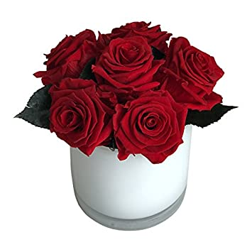 Amazon Worlds Longest Lasting Roses 6 Fresh Preserved Red