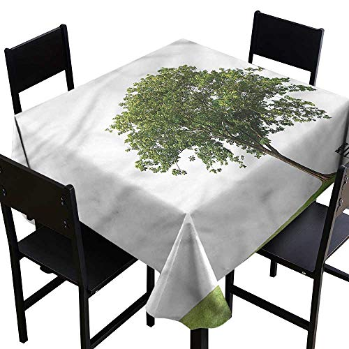 (Anshesix Dustproof Square Tablecloth Tree Solitude Bench Nobody and Durable W54 xL54 Indoor Outdoor Camping Picnic)