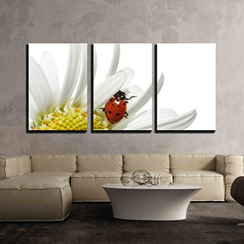 (wall26 - 3 Piece Canvas Wall Art - Ladybug on Daisy - Modern Home Decor Stretched and Framed Ready to Hang - 24