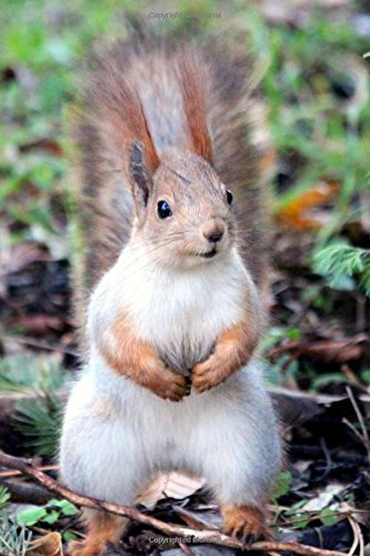 Inquisitive Red Squirrel in the Park Journal: 150 Page Lined Notebook/Diary pdf