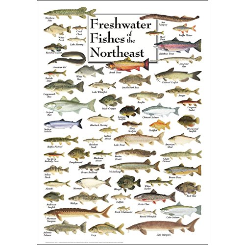 Earth Sky & Water Poster - Freshwater Fishes of the Northeast