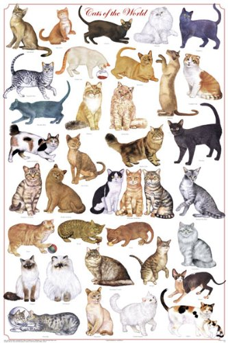 (24x36) Laminated Cats of the World Chart Poster (Cat Breed Chart)