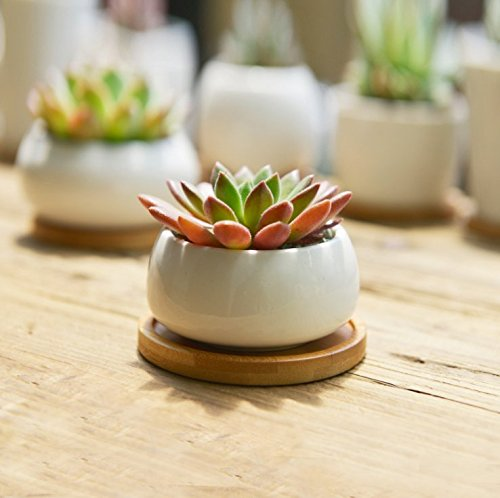 SUN-E Modern White Ceramic Succulent Planter Pots / Mini Flower Plant Containers with Bamboo Saucers (Flat round)