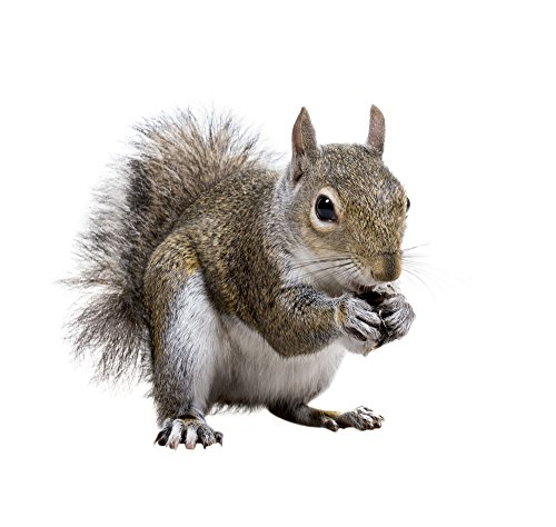 ALL NATURAL SQUIRREL NUT SQUARES 180 PACK HOLIDAY SALE!