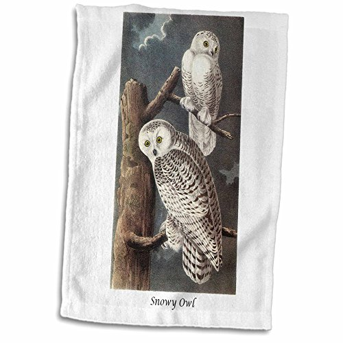 3dRose BLN John James Audubon Collection - Snowy Owl by John James Audubon - 12x18 Hand Towel (Snowy Owl Photo)