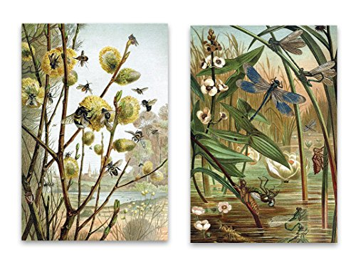 "Vintage Natural Curiousity Fridge Bee Dragonfly Magnet Set - 2""x3"" Bees & Dragonflies Illustrations for Kitchen Art, Office Decor, Gardener Gift for Adults, Kids, Men & Women - Made in USA Dragon Fridge Magnet"