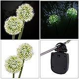 Solar Led Stake Lights,WinnerEco Solar Dandelion Flower 2 LED Landscape Lamps Waterproof for Garden,Yard,Path,balcony,Lawn