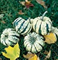 David's Garden Seeds Squash Winter Sweet Dumpling D681WP (White Green) 50 Open Pollinated Seeds