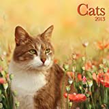 Perfect Timing - Avalanche, 2013 Cats Wall Calendar (7001493)