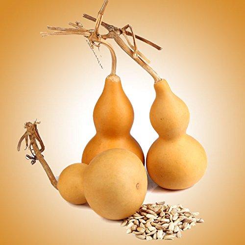 BigFamily Gourd Calabash Hard Light Yellow Shelled Season Standard Seed Random Handsel