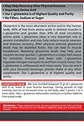 Pure Nutrition USA Pure Glutamine Free Form Micronized Unflavored L-Glutamine 5000mg Powder Sports Supplement (1000 Grams)
