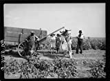 Photo: Cotton pickers who receive fifty cents a hundred pounds. Kaufman County,Texas