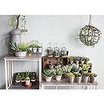 Time-Concept-Decor-Imitation-Rosemary-Plant-Artificial-IndoorOutdoor-Houseplant